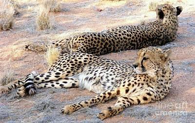 Leopard Couple Art Print by Noa Yerushalmi