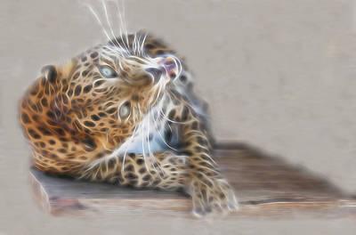 Photograph - Leopard Craziness by Diane Alexander