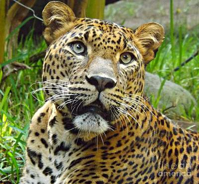 Art Print featuring the photograph Leopard Face by Clare Bevan