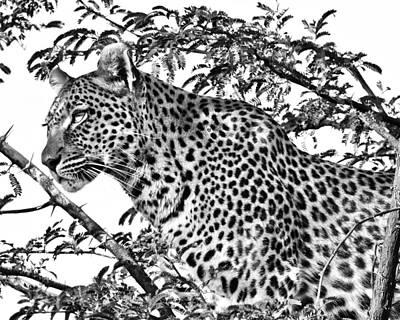 Photograph - Leopard by Gigi Ebert