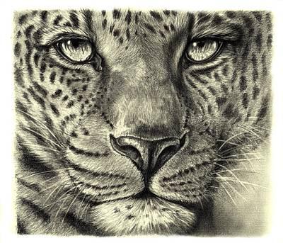 Art Print featuring the drawing Leopard by Heidi Kriel