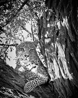 Photograph - Leopard II by Gigi Ebert