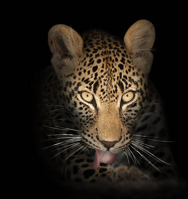 Leopard Portrait Photograph - Leopard In The Dark by Johan Swanepoel