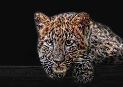 Jaguar Animal Photograph - Leopard-kitten by Joachim G Pinkawa