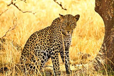 Leopard Print by Kongsak Sumano