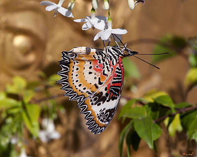 Art Print featuring the photograph Leopard Lacewing Butterfly Dthu619 by Gerry Gantt