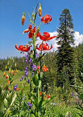 Photograph - Leopard Lilies by Kathleen Bishop