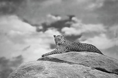 Leopard Wall Art - Photograph - Leopard On A Kopje by Mario Moreno
