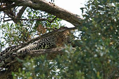 Photograph - Leopard On The Masai Mara by Aidan Moran