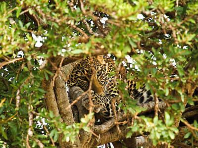 Leopard On Tree Print by Kongsak Sumano