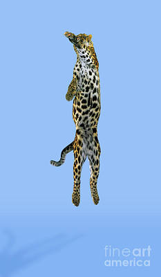 Photograph - Leopard Panthera Pardus by Stephen Dalton
