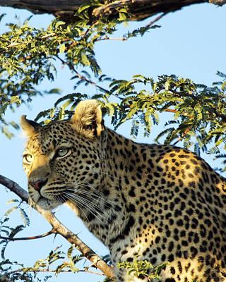 Photograph - Leopard Photography by Gigi Ebert