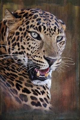 Photograph - Leopard Portrait 1 by Diane Alexander
