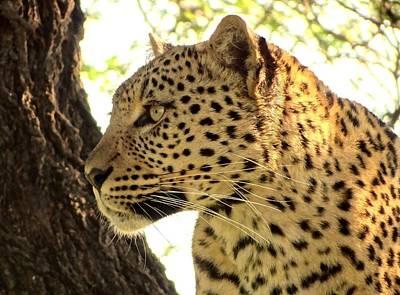 Photograph - Leopard Portrait by Bruce W Krucke