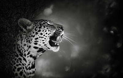 Mouth Photograph - Leopard Portrait by Johan Swanepoel