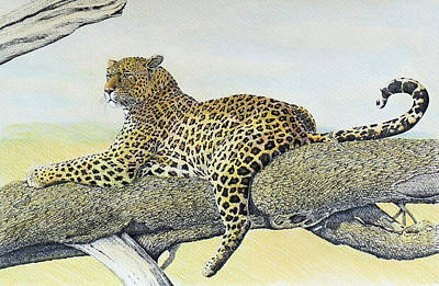Leopard Resting Art Print by Charles Berry