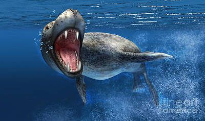 Anger Digital Art - Leopard Seal Swimming Underwater by Leonello Calvetti