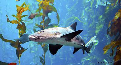 Leopard Shark Art Print