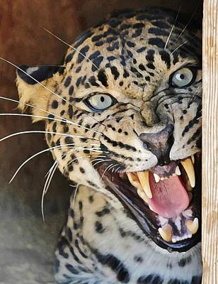 Leopard Snarling Art Print