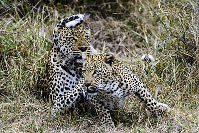 Photograph - Leopard Tease by David Yack