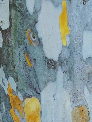 Leopard Tree Bark Abstract No 1 Art Print