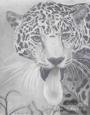 Drawing - Leopard by Wil Golden