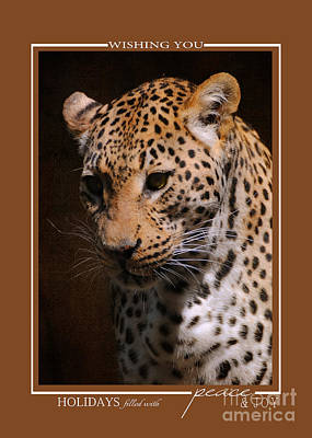 Photograph - Leopard Wildlife Christmas Cards by Jai Johnson