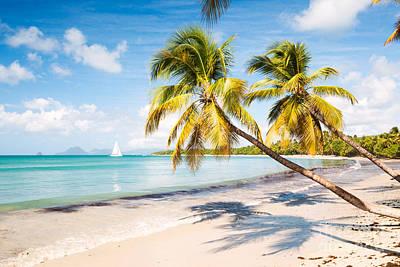 Tropics Photograph - Les Salines Beach - Caribbean by Matteo Colombo