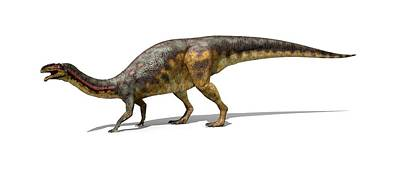 Triassic Photograph - Lessemsaurus Dinosaur by Jose Antonio Pe�as