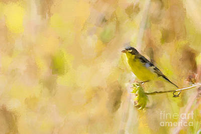 Photograph - Lesser Goldfinch On Sunflower by Marianne Jensen