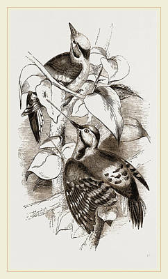 Lesser Spotted Woodpeckers Art Print by Litz Collection