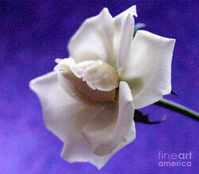 White Flower Photograph - Let It Be by Krissy Katsimbras