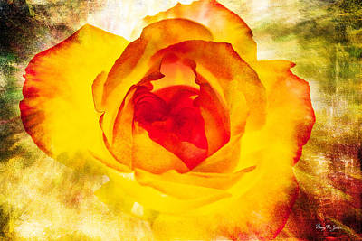 Floral - Rose - Let It Shine Art Print by Barry Jones