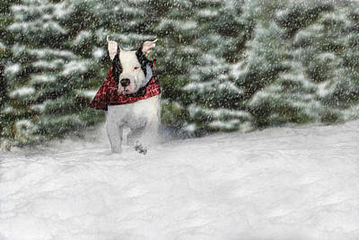 Pitbull Photograph - Snow Day by Shelley Neff