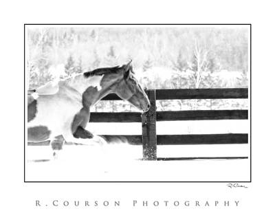 Photograph - Let It Snow by Ryan Courson
