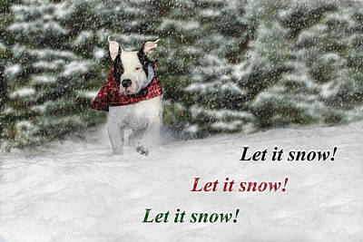 Pitbull Photograph - Let It Snow by Shelley Neff