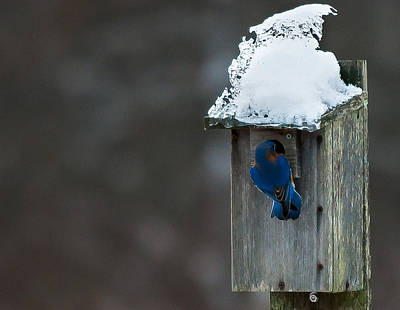 Wall Art - Photograph - Let Me In Its Cold by Scott Hafer