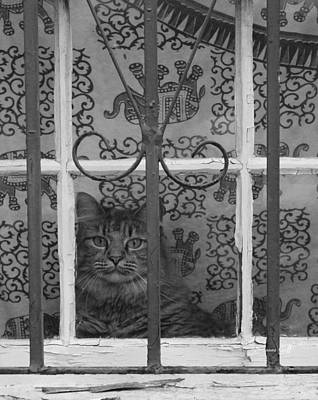 Photograph - Let Me Out - Ill Be Good by Suzanne Gaff