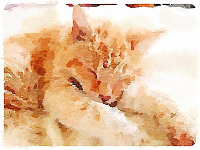 Digital Art - Let Sleeping Cats  by Shannon Grissom