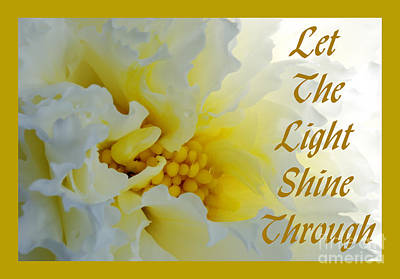 Photograph - Let The Light by Wendy Wilton