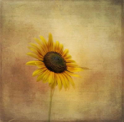 Photograph - Let The Sun Shine In by Kim Hojnacki