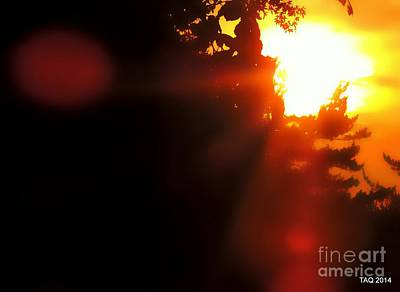 Photograph - Let The Sun Shine In by Tami Quigley