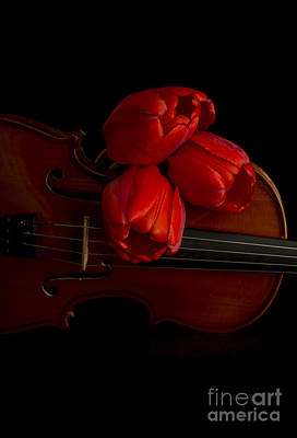 Fiddle Photograph - Let Us Make Beautiful Music Together by Edward Fielding