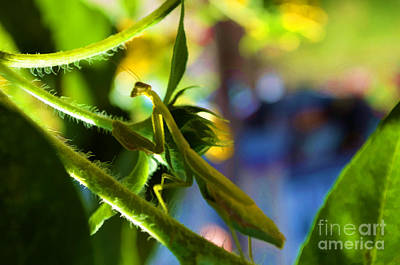 Photograph - Insect - Let Us Prey - Luther Fine Art by Luther Fine Art