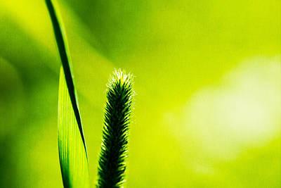 World Peace Photograph - Let World Be Green by Alexander Senin