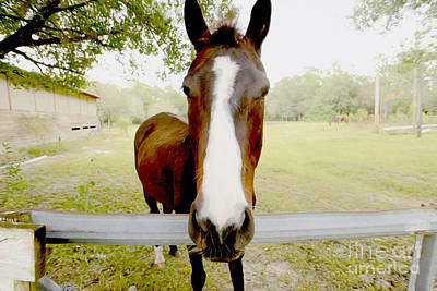 Horse Back Riding Photograph - Let's Go For A Ride by Jon Neidert