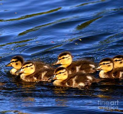Photograph - Let's Stick Together by Johanne Peale