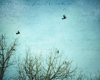 Photograph - Letters Of Flight by Lisa Parrish