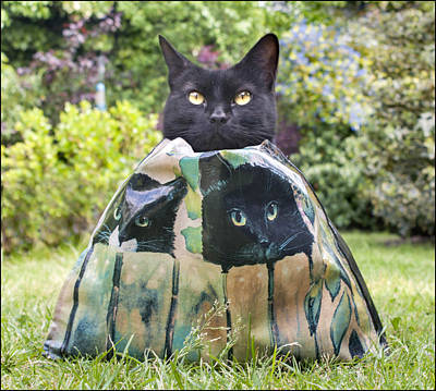 Silver Turquoise Photograph - Letting The Cat Out Of The Bag by Adrian Campfield
