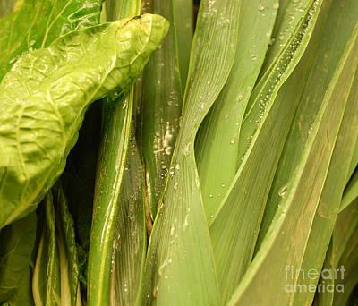 Photograph - Lettuce Bo Bettuce by Staci Bigelow
